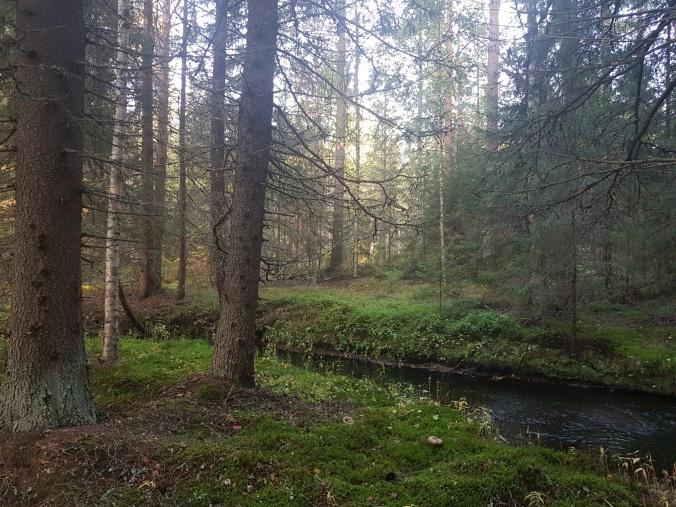 Etelä_Suomen valtion metsää.jpg